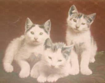 Vintage Kitten Postcard
