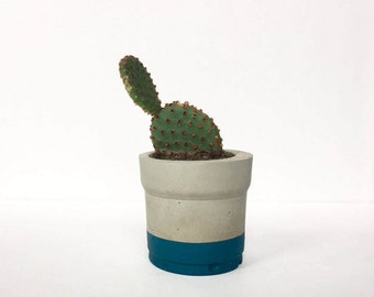 Mini Teal Blue Concrete Pot with Cactus