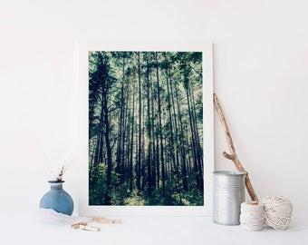 Digital Download, Fine Art Photography, Nature Photography, Printable Wall Art, Forest Photography, Printable Nature Photography