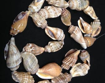 Shell Necklace, Whelk sea shells from the Pacific ocean, Mermaid costume necklace