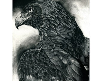 Before the Chase - ORIGINAL Scratchboard Drawing - Golden Eagle Wildlife Art
