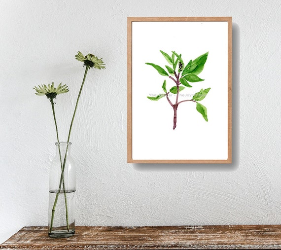 Basil art  Print, basil watercolor print, herb art, botanical print, kitchen art ,green, home decor, minimalist art, green basil