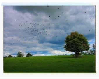 Painting from Photography - Nature Photography of Flying Blackbirds with Green Grass and Trees in Ireland