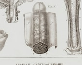 1840 Antique anatomy print, Male genitourinary tract, penis, bladder, original antique 176 years old