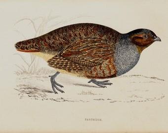1865 Antique PARTRIDGE Print, quail print, bird Illustration, bird print, Original Antique Hand Colored Print