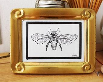 Black Pen and Ink Original Bee Drawing Illustration Scientific Entomology Gold Brass Framed Black and White