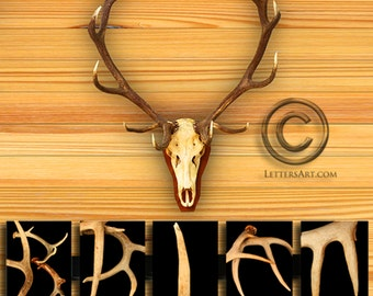 Antler Art  * Personalized Wedding Gift * Individual Antler Letters Framed to Spell Your Name or Word * Alpahbet Art * Custom Wedding Gift