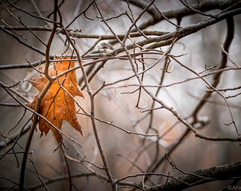 Autumn, Tree Home Decor, Oak Leaf,  Nature Photography, Yellow, Orange, Autumn Leaf, Tree Branches, Dark, Forest