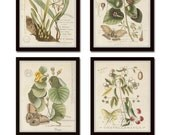 Vintage Butterfly and Botanical Print Set No.1, Giclee, Prints, Antique Botanical Prints, Wall Art, Prints, Vintage Butterfly Prints, Art