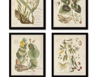 Vintage Butterfly and Botanical Print Set No.1, Giclee, Prints, Antique Botanical Prints, Wall Art, Prints, Vintage Butterfly Prints, Art