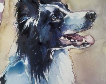 Border Collie, Pet Portraits, Dog Portraits, Portraits, Watercolor Portraits