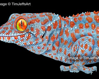 Tokay Gecko Colored Pencil Drawing
