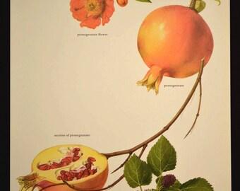 Fruit Wall Art Decor Kitchen Decor Pomegranate Mulberries