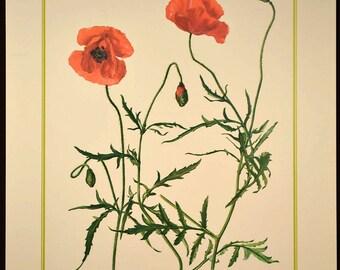 Common Poppy Flower Print Nature Wall Art Botanical Decor