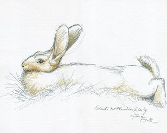 Brown Bunny giant of Flanders - watercolor on the spot