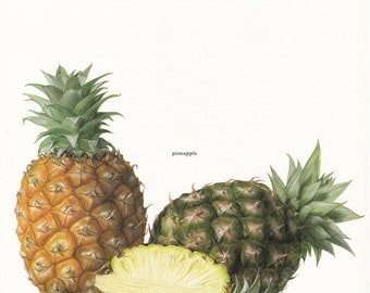 Pineapple vintage botanical art print fruit food kitchen decor by Marilena Pistoia 8 x 11 1/4 inches