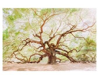 Angel Oak, Charleston Fine Art Prints