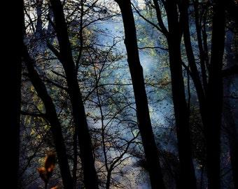 Forest Dreamscape - Nature Fine Art Photography