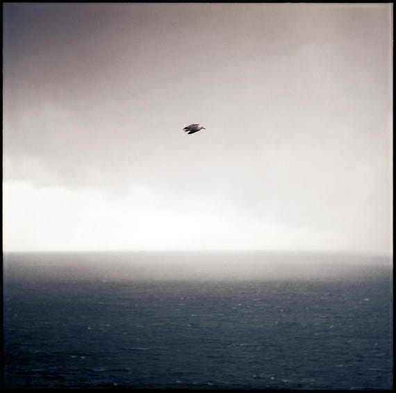 Ring of Kerry Seas, Analog Photography Print, Limited Edition, Dark Blue, Landscape, Large scale Art, Ireland, Ocean, Sea, Seagull, Bird Art