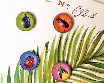 Insect Magnet Set, Bug Magnets, Beetle Magnets, Insect Refrigerator Magnets, 1 Inch Round, Beetle, Ladybug