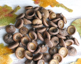 50 Large Acorn Cap Crafting Supplies Rustic Decor Fall Decor Natural Ornament Supply Kids Arts & Crafts Fairy doll hats Woodland projects