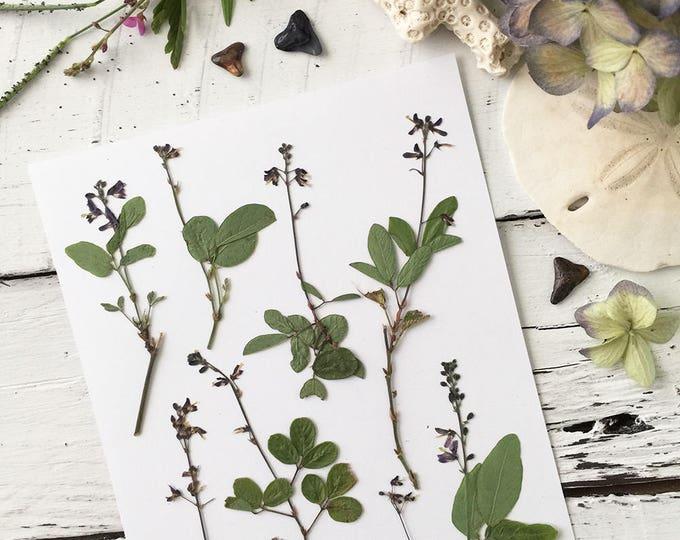 Real Pressed Flowers:  Natural Florida Wildflower > Dye Free - Biodegradable - Cruelty Free - ECO Friendly