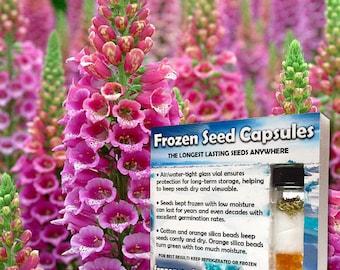 Foxglove Seeds (Digitalis purpurea) 20+ Rare Seeds in Frozen Seed Capsules plus FREE 6 Variety Seed Pack!