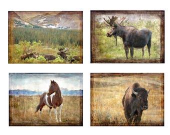 Set of four Photo Based Art Cards, Moose, Horse, Bison, Nature, Landscape, Greeting Cards, Blank, Thank you, Sympathy,
