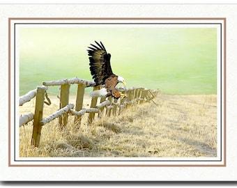 Handmade Card, All Occasion Card, Photo Greeting Card, Bald Eagle Flying, OOAK Card, 5x7 Blank Card, Fine Art Print, Photo Note Card