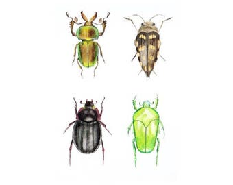 Beetles illustration watercolour