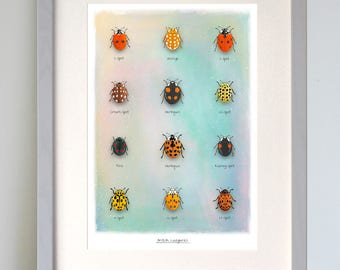 British Ladybird fine art print. A4 & A3 prints available, identification chart, nature art poster, wildlife print, English countryside art
