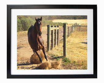 Horse Action wall art home decor  6'x8' photo in 8'x10' white matte frame mount on backing board
