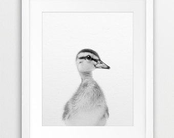 Duckling Print, Nursery Animal Wall Art, Baby Duckling, Cute Baby Animal, Black & White Animal Photo, Nursery Decor, Kids Room Printable Art