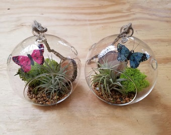 Butterfly Ball - Air Plant Globe Terrariums - Hand Blown Glass - 5.5""