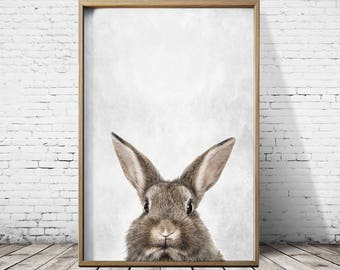 Rabbit Print - Wall Art Prints - Poster Prints - Animal Prints - Rabbit Poster- Rabbit Wall Art -