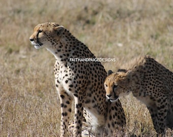 Two Cheetahs Picture, cheetahs, picture, nature photography, animal photography, cheetah photography, photography, instant download, digital
