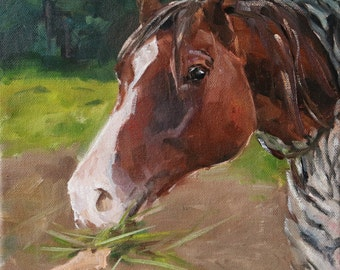 """small horse oil painting, """"Fresh grass"""", 8x8 inch, oil on stretched canvas"""