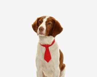 Pet tie. Red tie dog. Dog tie. Wedding tie. Tie solidarity.