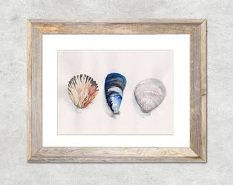 Shell Collection Original Watercolor Painting