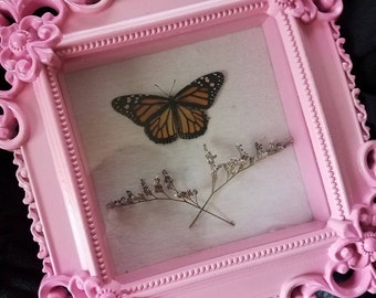 Real Monarch Butterfly Frame - Dried Flowers Victorian Pink