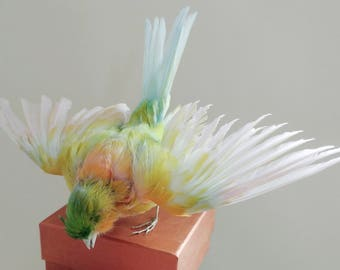 Taxidermy Canary Bird Pastel Dyed Curiosity Collectable