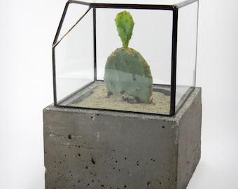 Geometric glass terrarium, cement planter, modern design, handmade, lead free, Christmas gift.