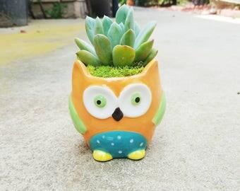 Owl-dorable orange owl with living succulent