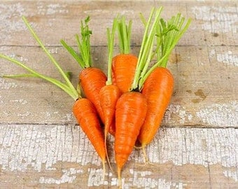 50  Royal Chantenay Non-Gmo Carrot Seeds