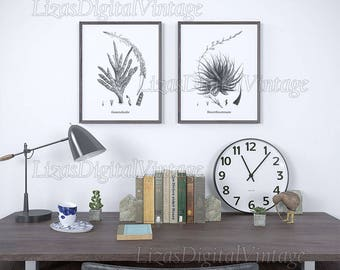 Succulent decor, Black and white printable art, Succulent art, Haworthia, Gasteria, Home wall art vintage, Digital download, Botanical decor