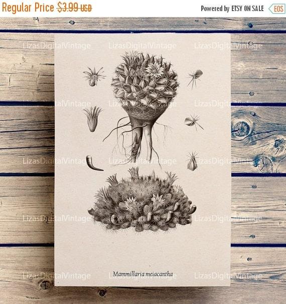 50% OFF Cactus print, Cactus decor, Botanical chart, Floral clip art, Large prints, Cactus, Instant download print, A3, 8x10, 11x14, JPG Png