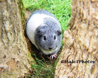 Guinea Pig Print, Wildlife Print, Nature Photograph, Color Photograph, Guinea Pig Photo, Pet Photography, A4 or A3 Size.