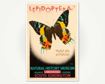 Lepidoptera Poster Print - Vintage London Underground Poster Art - Moths and Butterflies at Natural History Museum