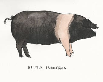 Original illustration - Pig