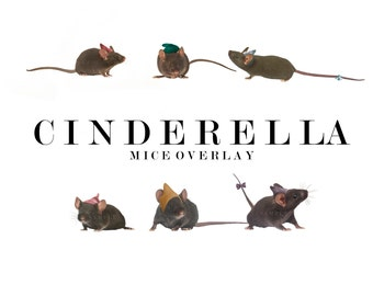 Cinderellas Mice Overlay